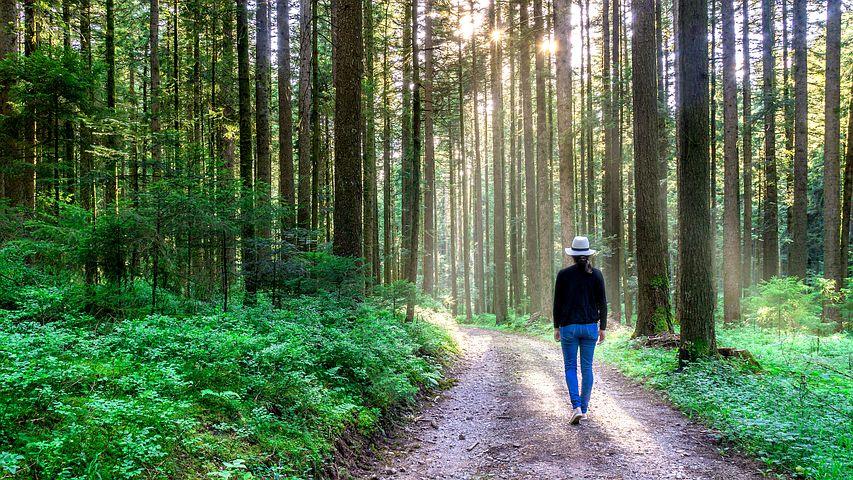 Bekanntes neu sehen – meditativer Spaziergang an der Grenze von Stadt und Wald