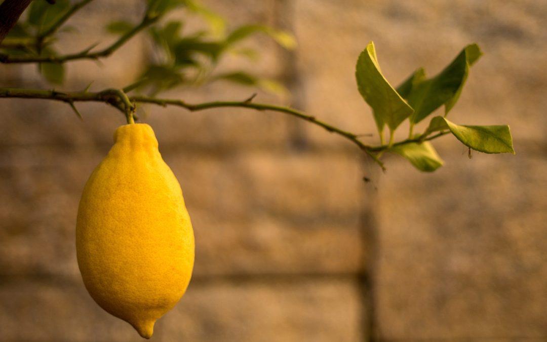 PERSONALLY: Ein Corona Lemon, bitte!